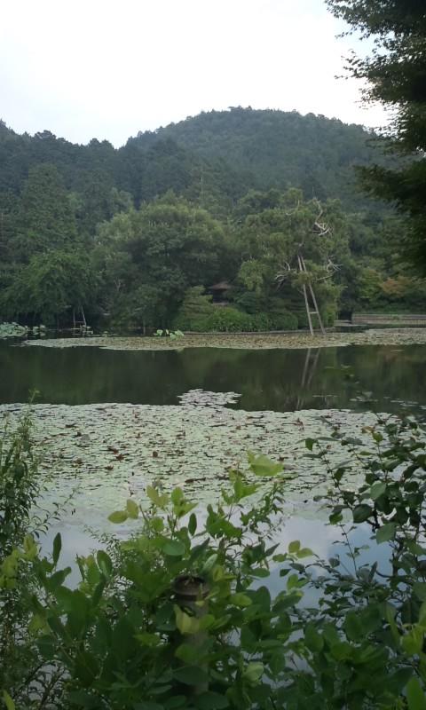 徳大寺の庭を見る