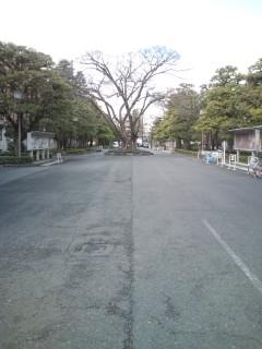 がんばれ福島